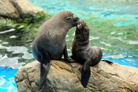 〜遊びながら学べる水族館〜  「京都水族館」チケット付ステイプラン