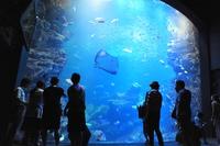 【お子様歓迎】〜遊びながら学べる水族館〜 「京都水族館」チケット付ステイプラン
