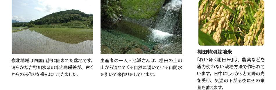 JA土佐れいほくの棚田特別栽培米