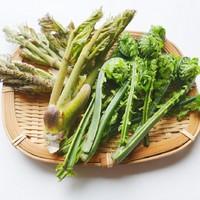 ◆≪★期間限定★≫地物の山菜をふんだんに使った夕食を堪能♪【〜春の山菜てんこ盛りプラン〜/夕朝食付】