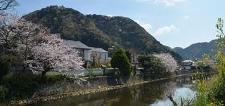 【お花見プラン】 *☆*……・・…*☆*お夕食時に「峡谷桜」生酒付き *☆*……・・…*☆*