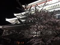 【熱海の桜はまだ散らない!】3/28〜4/12開催!熱海城さくら祭りに行こう!【1泊2食バイキング】