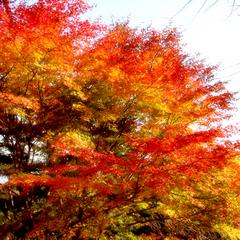 【一人旅★1泊2食付】紅葉の秋を旅する♪木曽の旅路と郷土料理をゆっくり味わう一人旅