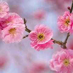 【3・4月】新たな門出やご長寿、お誕生日に〜祝い皿に笑顔溢れる春のお慶びプラン〜のんびりステイ特典付