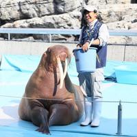 【海の動物と仲良くなろう♪】水族館うみたまごのチケットと嬉しい特典付!ファミリーパックプラン★