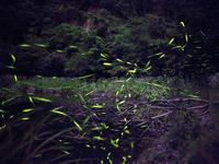 【ファミリー】【自然体験】ホタル見ナイトプラン