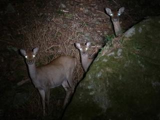 ナイトサファリプラン〜野生動物を探そう〜