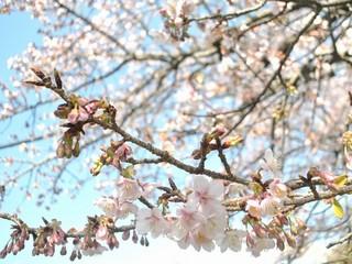 【伊豆の春】花と美食のグルメプラン
