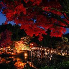 【秋は菊花・紅葉まつり】彩づく天城路、秋の郷土料理の旅〜あわびの酒蒸し付き〜≪現金特価≫