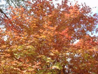 紅葉と読書の秋。映山湖で遊ぶファミリープラン【秋得】【紅葉】【ファミリー】【お子様歓迎】
