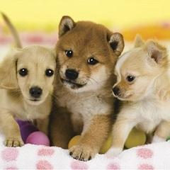 ★愛犬専用室【遊心館サライ】和室8畳+板の間2畳(テラス付)