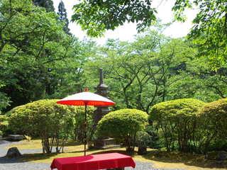 京都の青葉紅葉を楽しみましょう!宇治茶セット付き★