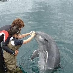 伊豆の海でイルカとふれあい体験♪特別価格でお申込み可★