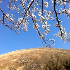 伊豆の桜を満喫♪伊豆高原で少し早めの春旅を楽しもう!