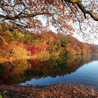 ◆伊豆×紅葉◆風情たっぷり修善寺・一碧湖♪お子様と一緒に紅葉狩りプラン