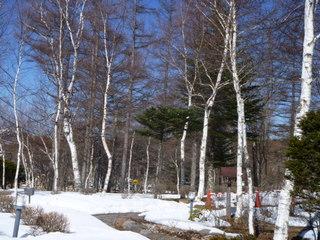 白樺の林を見ながらの朝食付きプラン