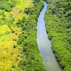【大人気!やんばるの自然体験】カヌーでマングローブの森ツアー!【朝食付】
