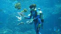 【新江ノ島水族館×2食付】お得な入場券付◆イルカやペンギンに会える湘南の人気スポットへ♪【お部屋食】