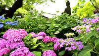 【春夏旅セール】ゆったり鎌倉&長谷観光♪風味豊かな和定食を味わう、鎌倉の朝餉<朝食付>