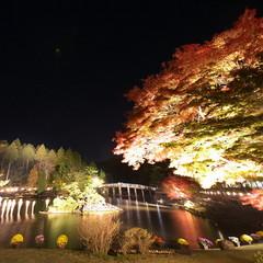 【伊豆紅葉の名所 虹の郷チケット付】例年の見ごろは11月中旬〜12月上旬♪ 約2000本の紅葉めぐり