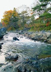 ◇気軽に楽しむ本格渓流釣り◇体験プラン♪【自然を感じる旅へ】