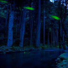 【自然を感じる旅】天然のほたるを観賞 小さな命の光を感じてください。【期間限定】