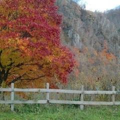 紅葉の秋♪お得な秋割プラン! 【 1泊朝食付 】【美味旬旅】