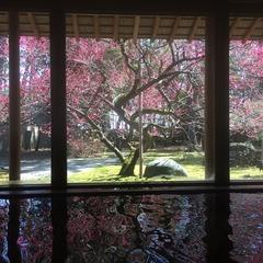 【はじめての温泉旅行】お出かけしたくなる春に♪富山の地酒試し飲みセット&女性に色浴衣特典付き