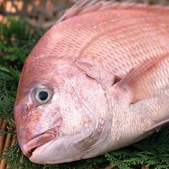 <ポイント4%>名水の町・黒部の新鮮な鯛を「鯛しゃぶ」で◆富山湾の恵みを満喫!