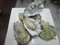 <七尾湾牡蠣づくし>今が旬の牡蠣料理で大満足できます