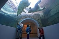 【かわいい動物達に会える!】日本平動物園入園チケット付き宿泊プラン《天然温泉松之湯入湯サービス》