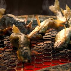 ■チョイス懐石プラン■〜選べるメイン料理〜能登牛すき焼き♪ピチピチ朝獲地魚♪料理長オススメの旬の幸♪