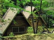 森に包まれた自然満喫プラン【素泊まり】【添い寝無料】