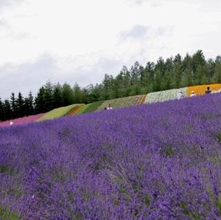 ラベンダーと花々が咲き乱れる♪ 夏期特別プラン(1泊2食付)