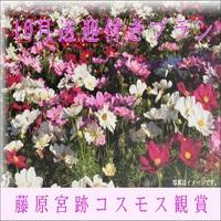 【絶景☆】藤原宮跡コスモス花園送迎付き 大和遊膳コース