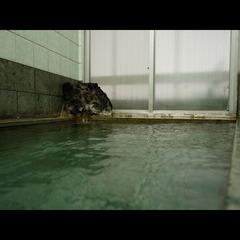 地魚おいしい★海の幸と天然温泉かけ流し[1泊2食付]