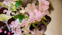 【楽天スーパーSALE】5%OFF!<◆2021春の膳◆グレード UP!>季節の膳+春の逸品グルメ