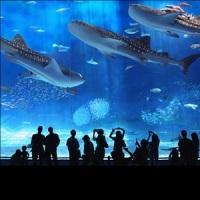◎美ら海水族館チケット付・駐車場無料の2大特典付き素泊まりプラン●ジンベイザメに会いに行こう♪