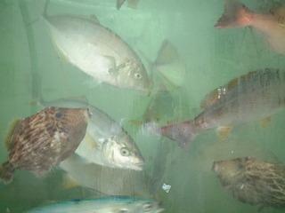 地魚舟盛&しっぽく料理のスペシャル・グルメプラン