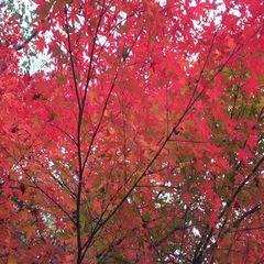 満天の星!紅葉を独り占め!大好評絶品キッシュ!ノスタルジックリゾート モータウンで過ごす秋の休日。