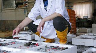 ☆蟹のフルコース☆蟹好きにはたまらない!蟹づくし御膳♪冬季の本ズワイ蟹は絶品です!