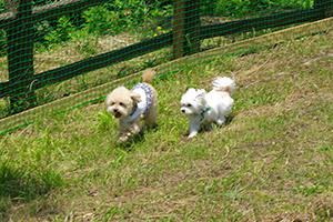 小型犬用 プチドッグラン
