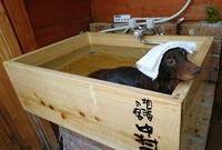 【ワンちゃんと一緒!】ジェットバスにも一緒に!ワンちゃん専用檜風呂設置!