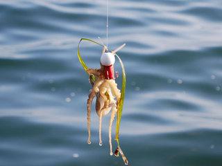 秋イチオシ★釣ったイイダコを調理&釣セット付<中庭桟橋から七尾湾の秋の旬を釣り上げる!>【お部屋食】