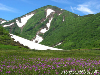 日本百名山妙高山・火打山・高妻山登山サポートプラン(無料送迎有り)