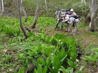 【体験】春の信越高原水ばしょう散策プラン