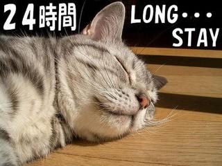 24時間ホテル満喫!しっかり熟睡♪ロングステイプラン(当日昼12時〜翌日昼12時までおくつろぎ)
