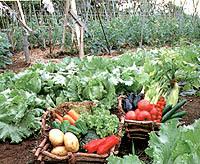 【当館自慢】自家農園で育てた採りたてパリッパリ高原野菜を食べに来て!◆一泊朝食付き宿泊プラン◆
