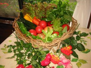 【当館人気プラン】標高1千mの自家農園で育てた採りたてパリッパリッの美味しい野菜を食べに来てください