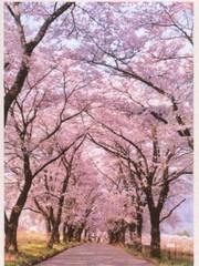 花に温泉に新緑の清里高原に出かけよう。GWで30日〜2日は朝食付で6000円〜のお得なプランです!